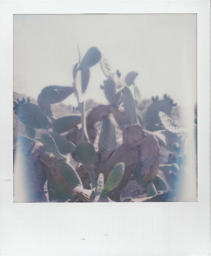 ibiza-flore-30